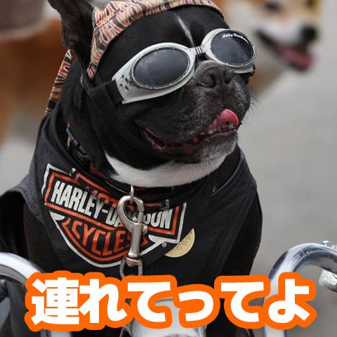 新商品情報【僕も連れていってよ】ペットとタンデム特集